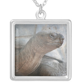 Galápagos giant tortoise photograph silver plated necklace