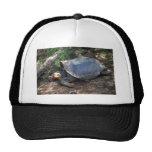 Galapagos Giant Tortoise (Saddle-Backed type) lyin Mesh Hats