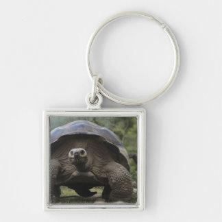 Galapagos Giant Tortoises Geochelone Keychain