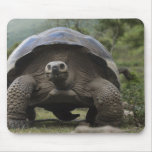 Galapagos Giant Tortoises Geochelone Mouse Pad