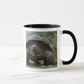 Galapagos Giant Tortoises Geochelone Mug