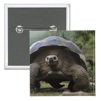 Galapagos Giant Tortoises Geochelone Pinback Button