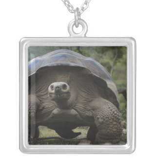 Galapagos Giant Tortoises Geochelone Silver Plated Necklace