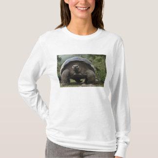 Galapagos Giant Tortoises Geochelone T-Shirt