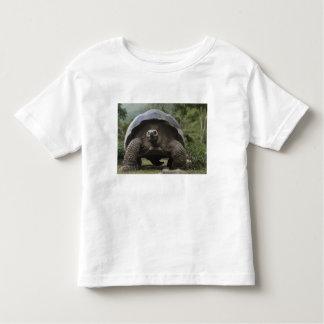 Galapagos Giant Tortoises Geochelone Toddler T-shirt