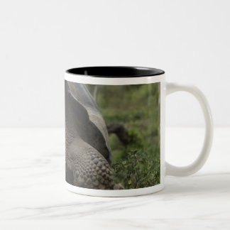 Galapagos Giant Tortoises Geochelone Two-Tone Coffee Mug