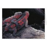 Galapagos iguana card
