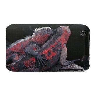 Galapagos iguana iPhone 3 covers