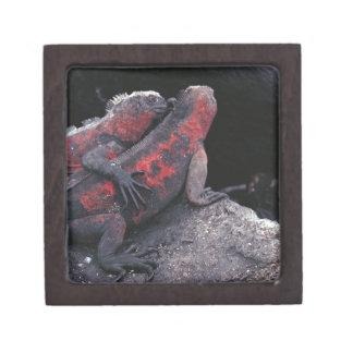 Galapagos iguana jewelry box