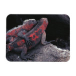 Galapagos iguana vinyl magnets