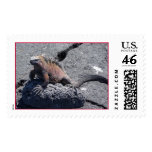 Galapagos Island Christmas Iguana Postage Stamp