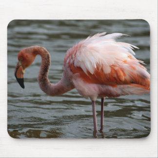Galapagos Islands Flamingo Mouse Pad