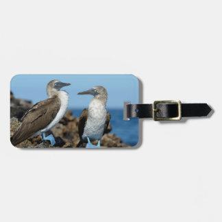 Galapagos Islands, Isabela Island Bag Tag