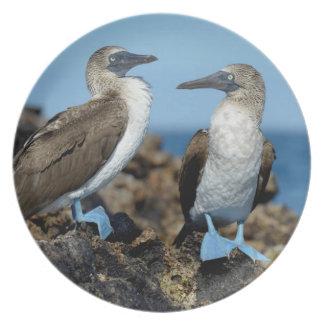 Galapagos Islands, Isabela Island Dinner Plate