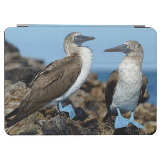 Galapagos Islands, Isabela Island iPad Air Cover