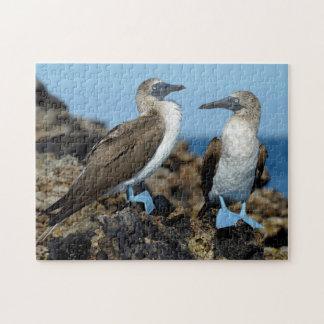 Galapagos Islands, Isabela Island Jigsaw Puzzle