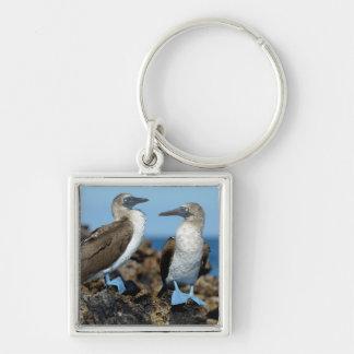Galapagos Islands, Isabela Island Keychain
