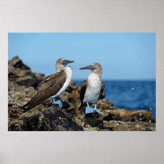 Galapagos Islands, Isabela Island Poster