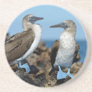 Galapagos Islands, Isabela Island Sandstone Coaster