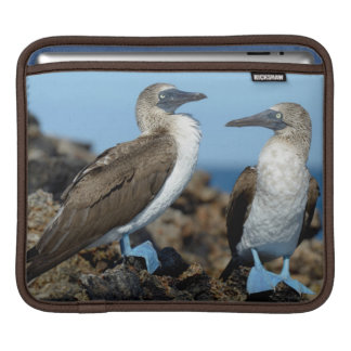 Galapagos Islands, Isabela Island Sleeve For iPads