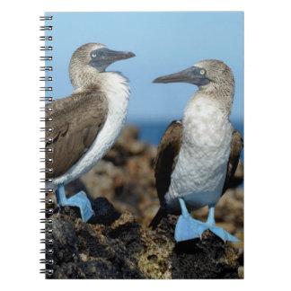 Galapagos Islands, Isabela Island Spiral Notebook