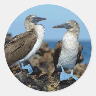 Galapagos Islands, Isabela Island Round Sticker