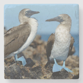 Galapagos Islands, Isabela Island Stone Coaster