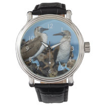 Galapagos Islands, Isabela Island Wrist Watch