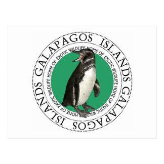 Galapagos Islands Penguin Postcard