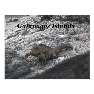 Galapagos Islands Postcard