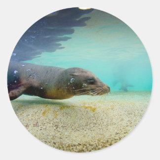 Galapagos Islands underwater seal lion Classic Round Sticker