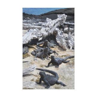 Galapagos - Marine Iguana Canvas Print