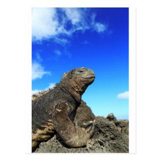 Galapagos marine iguana sunbathing postcard