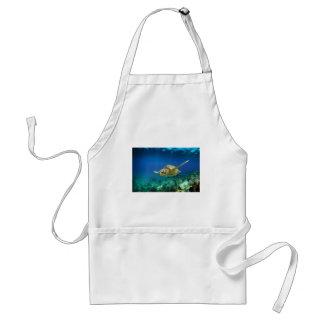 Galapagos paradise green sea turtle underwater adult apron
