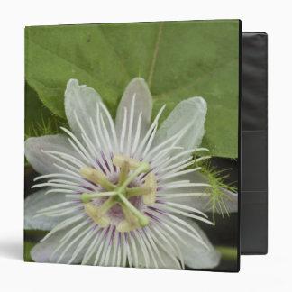 Galapagos Passion Flower Passiflora foetida 3 Ring Binder