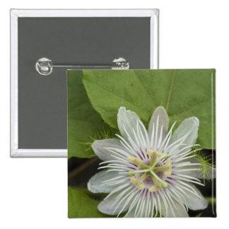 Galapagos Passion Flower Passiflora foetida Pinback Buttons