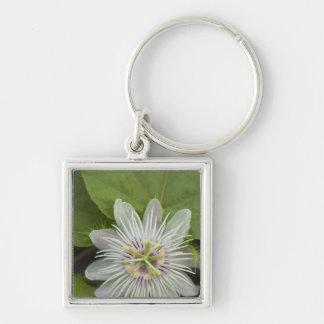 Galapagos Passion Flower Passiflora foetida Keychains