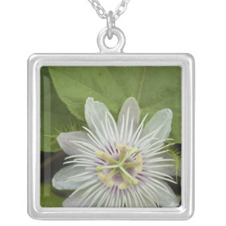 Galapagos Passion Flower Passiflora foetida Custom Necklace
