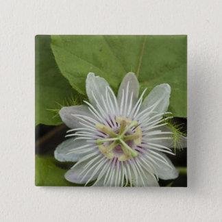 Galapagos Passion Flower Passiflora foetida Pinback Button