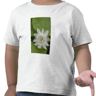 Galapagos Passion Flower Passiflora foetida T-shirts