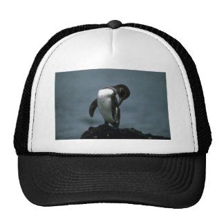 Galapagos' Penguin Preening Trucker Hats