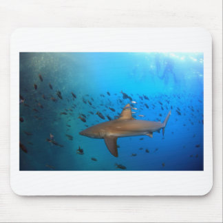 Galapagos reef shark mouse pad