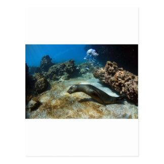Galapagos sea lion blowing bubbles postcard