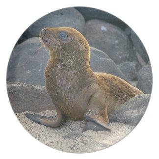 Galapagos sea lion melamine plate