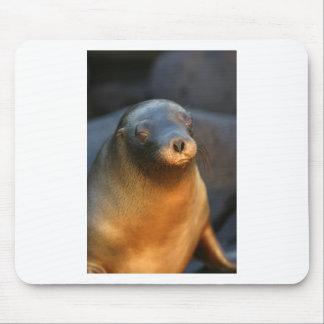 Galapagos sea lion mouse pad