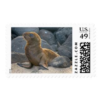 Galapagos sea lion postage