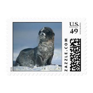 Galapagos Sea Lion Postage Stamps