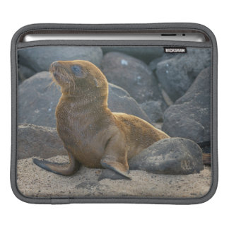 Galapagos sea lion sleeve for iPads