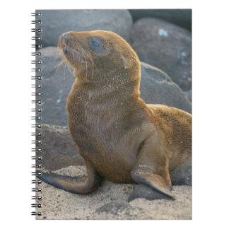 Galapagos sea lion spiral notebook