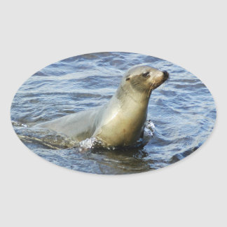 Galapagos Sea Lion Sticker 2